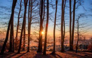 amazing forest landscape